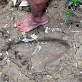 Dấu chân người khổng lồ bí hiểm ở Malaysia