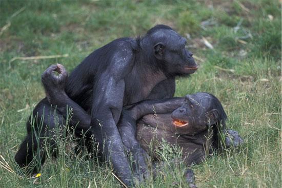 """Những đặc trưng """"rất"""" con người ở động vật có thể bạn chưa biết"""