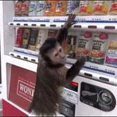 Video: Khỉ con mua nước ngọt