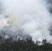 Indonesia dội bom nước để dập cháy rừng