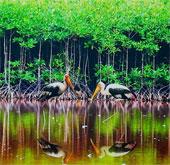 Bảo tồn đa dạng sinh học Vườn quốc gia Mũi Cà Mau