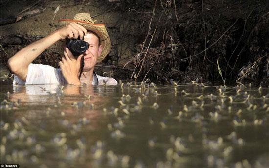 """Chiêm ngưỡng loài phù du """"truy hoan"""" trên sông"""