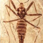 Phát hiện sinh vật cổ đại đặc biệt