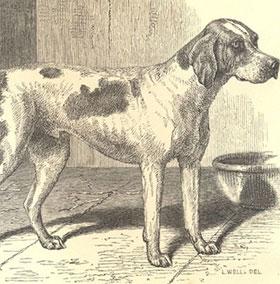 Các giống chó đầu tiên xuất hiện trên trái đất