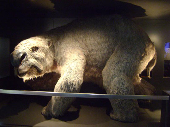 Phát hiện hóa thạch gấu cổ đại tại Australia