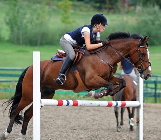 Đột phá trong điều trị tổn thương ở ngựa