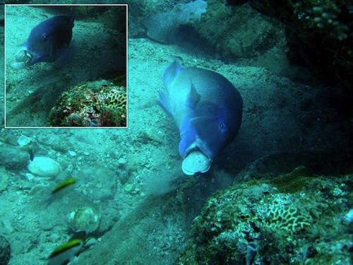 Xem cá sử dụng công cụ lấy thức ăn