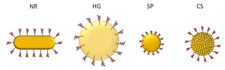 Phân tử nano vàng chữa bệnh ung thư