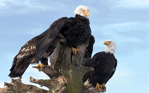 Những bức ảnh tự nhiên đẹp nhất 2011