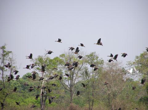 Cát Tiên được công nhận là khu sinh quyển thế giới