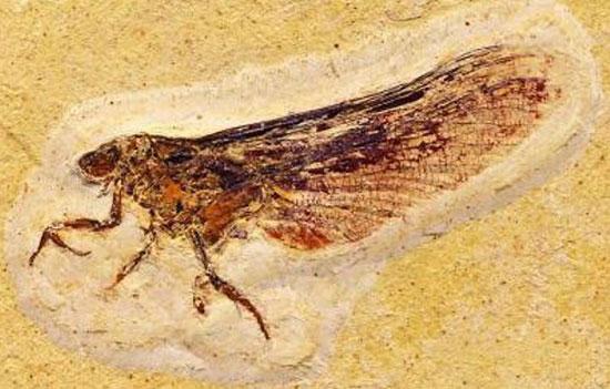 Phát hiện họ côn trùng mới có niên đại 120 triệu năm
