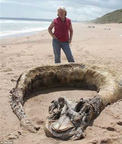 """Phát hiện xác """"quái vật"""" trên bãi biển"""