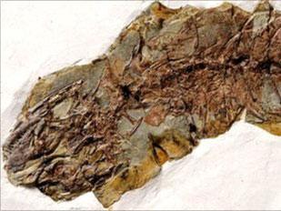 Tìm thấy hóa thạch thằn lằn 120 triệu năm tuổi