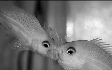 """Xem cá """"hút"""" con mồi"""