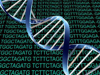 Xác định 2 base mới trong cấu trúc DNA