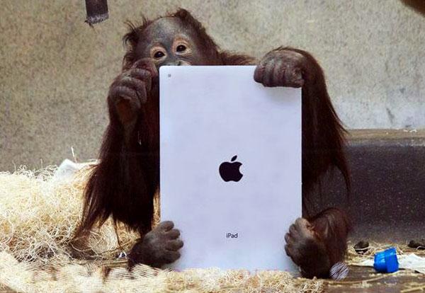 Trí thông minh động vật