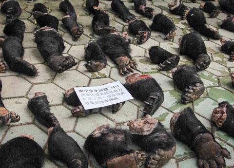 343 con tê tê đông lạnh, 141 chân gấu (từ ít nhất 43 con gấu) được thu hồi tại thành phố Nam Ninh, thủ phủ khu tự trị dân tộc Choang Quảng Tây, Trung Quốc, từ những tay săn trộm. Theo giới chức nước này, giá trị từ sản phẩm của động vật hoang dã bán trên thị trường chợ đen khoảng 20 triệu Nhân dân tệ.