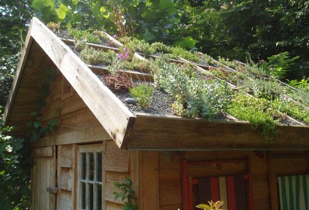 Australia khuyến khích trồng cây trên các mái nhà