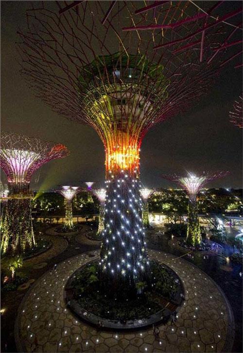 Với chiều cao lên tới 50m và tán rộng, những siêu cây này không chỉ tạo ra năng lượng từ ánh nắng mà còn có chức năng làm mát cho du khách tham quan.