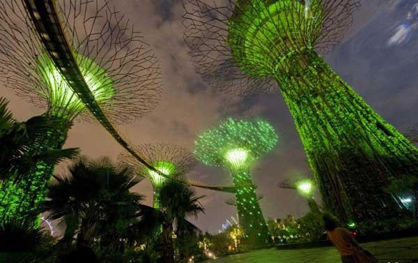Phần thân của những siêu cây đặc biệt này chính là nơi sinh sống của những loài thực vật đặc trưng.