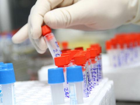 Giải mã gene người Việt để cải tạo giống nòi
