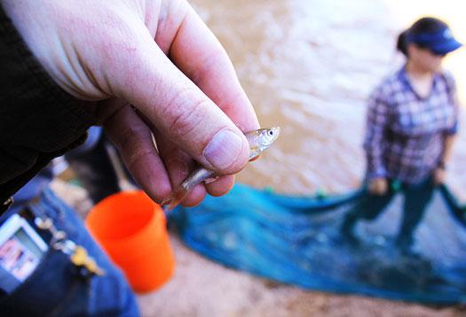 Nguy hiểm cá nhiễm hóa chất nhựa