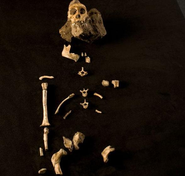 Thấy bộ xương nguyên vẹn nhất tổ tiên loài người
