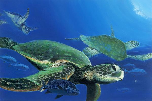 Hải quân Philippines cứu rùa biển