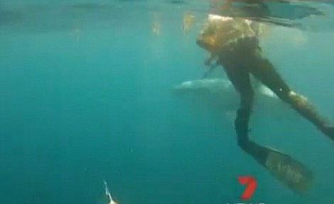 Video: Thợ lặn Úc chống trả sự tấn công của cá mập