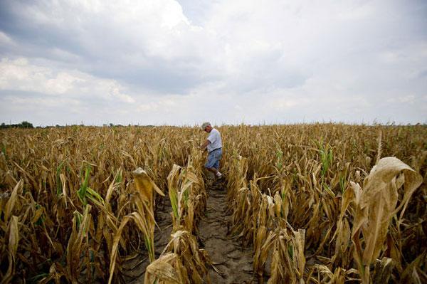 Mỹ: Hạn hán nghiêm trọng nhất trong gần 60 năm qua