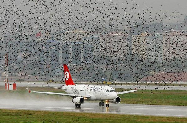 Ngăn chặn chim tấn công máy bay