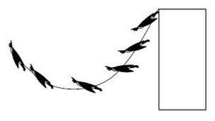 Mô hình mô tả quỹ đạo bay của Người Dơi.
