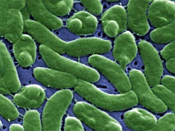 Biến đổi khí hậu tạo ra nhiều vi khuẩn đường ruột