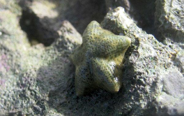 Tiến hóa nhanh không tưởng ở sao biển