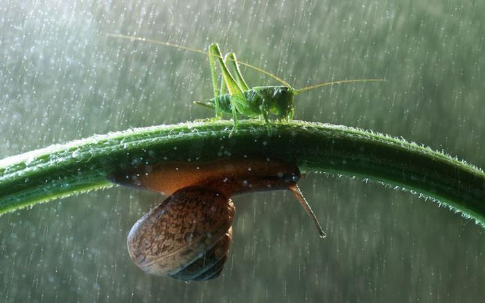 Ảnh đẹp: Côn trùng trong vườn mưa