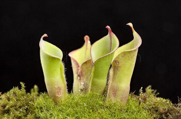 Những loài cây ăn thịt ẩn thân cực đỉnh