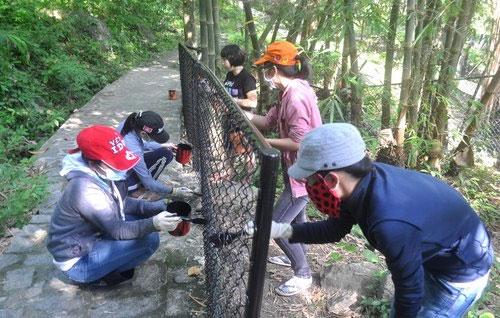 Sinh viên bảo vệ động vật hoang dã