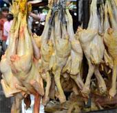 Ca tử vong thứ 9 do nhiễm H5N1 ở Campuchia