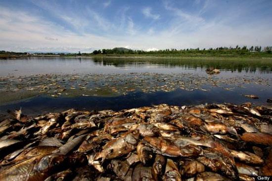 Cá chết thành đống ở hồ chứa Mexico