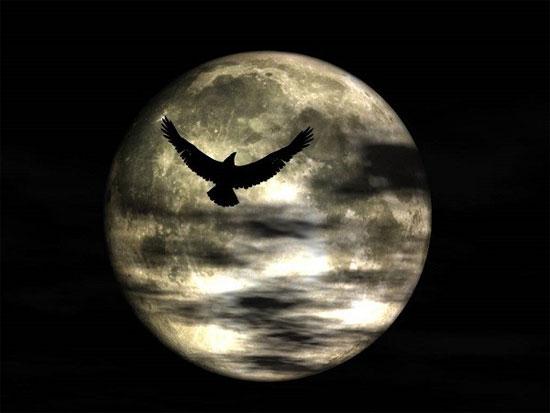 """Xem động vật """"phát điên"""" mỗi khi trăng tròn"""