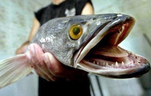 Những quái vật của đại dương