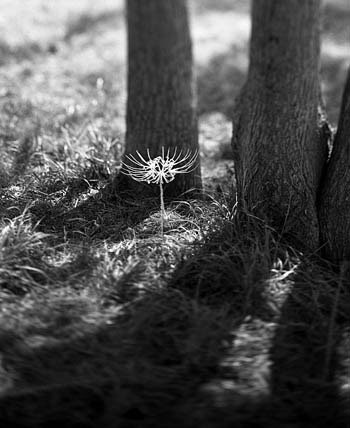 Hoa làm từ xương động vật