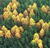 Biểu tượng phát xít bí ẩn trong khu rừng Đức