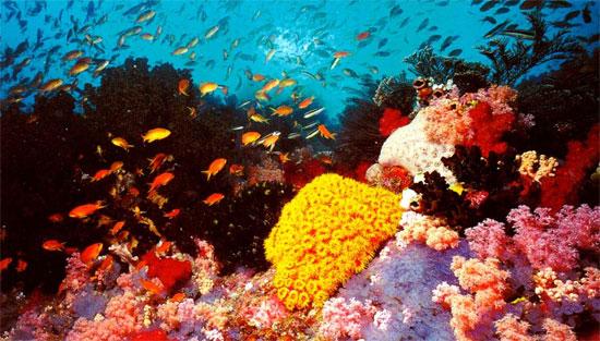 Rạn san hô lớn nhất thế giới xuống cấp nghiêm trọng