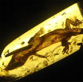 Mexico: Phát hiện thằn lằn 23 triệu năm tuổi