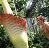 Người dân xếp hàng xem hoa khó ngửi nhất thế giới