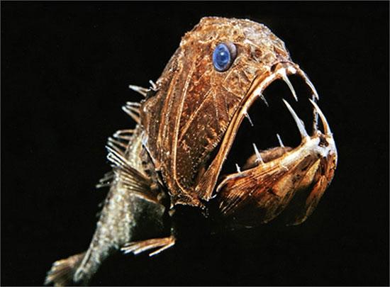 """Tìm hiểu loài """"cá yêu tinh"""" dưới đáy biển"""