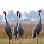 Hơn 31 tỷ đồng bảo tồn Vườn quốc gia Tràm Chim
