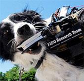 """Kính """"Google Glass"""" dành cho chó"""