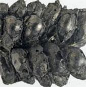 Phân bón được dùng từ 8.000 năm trước